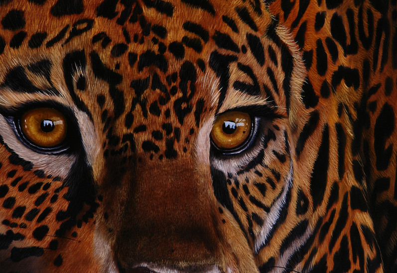 jaguar detalle 100x120 2019.jpg
