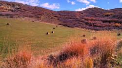 Hay in valleys