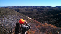 Scanning for elk