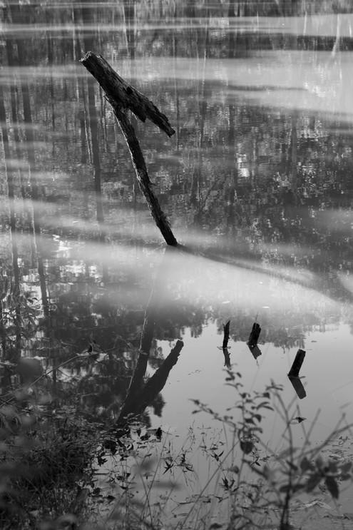 Ribbon Preserve lake.jpg