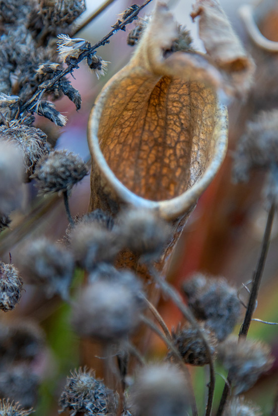 200119_uncc-botanical-non360_012.jpg