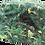 Thumbnail: Stetson Bob Réversible Jungle