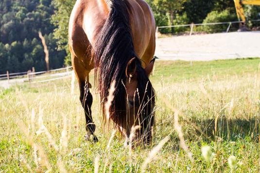 reitstall_koppel_pferd.jpg