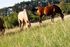 reitstall_auf_koppel_zwei_pferde.jpg