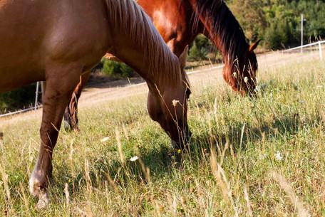 reitstall_auf_koppel_zwei_pferde_1.jpg