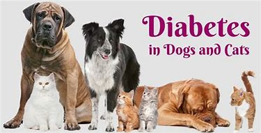Tips for diabetic pets