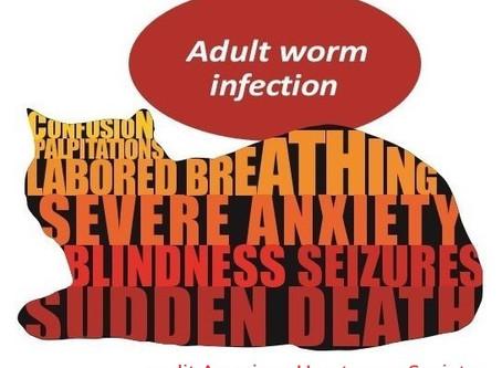 Heartworm Disease: emphasis on our feline friends