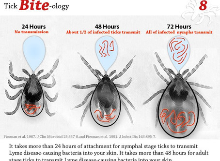 Five Common Diseases Spread by Ticks