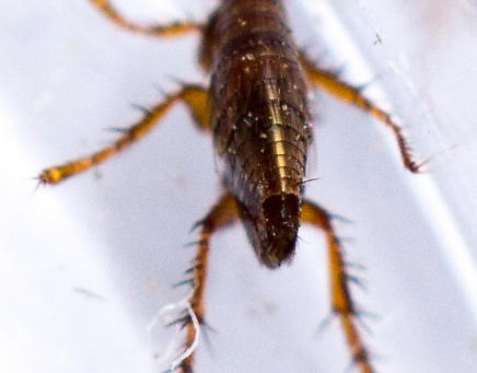 Flea Problem?