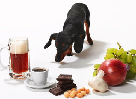 Dog Poisons -top reported
