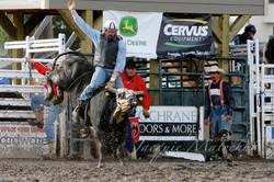 Ya, bulls can jump!
