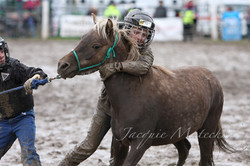 The Wild Ponies are tough
