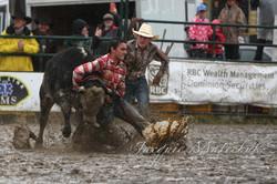 Wild cow racing? Wha??
