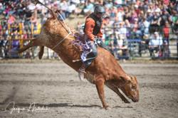 Boy's Steer Riding