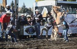Wild Pony Races