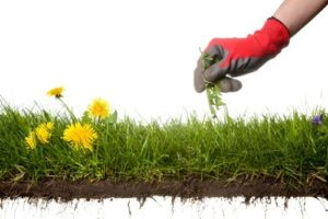 Weed Control Methods For Your Lawn