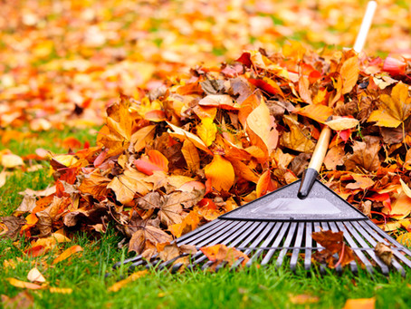 It's Fall, Tidy Up Your Yard!
