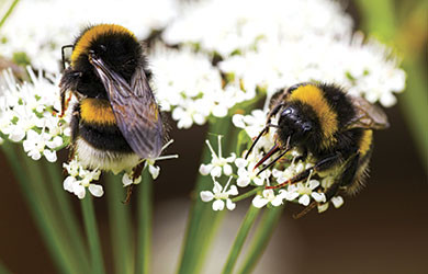 Easy Ways to  Help Save Disappearing Bees…