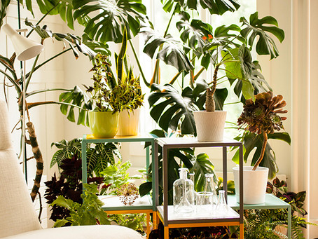 How To: Care For Indoor Plants