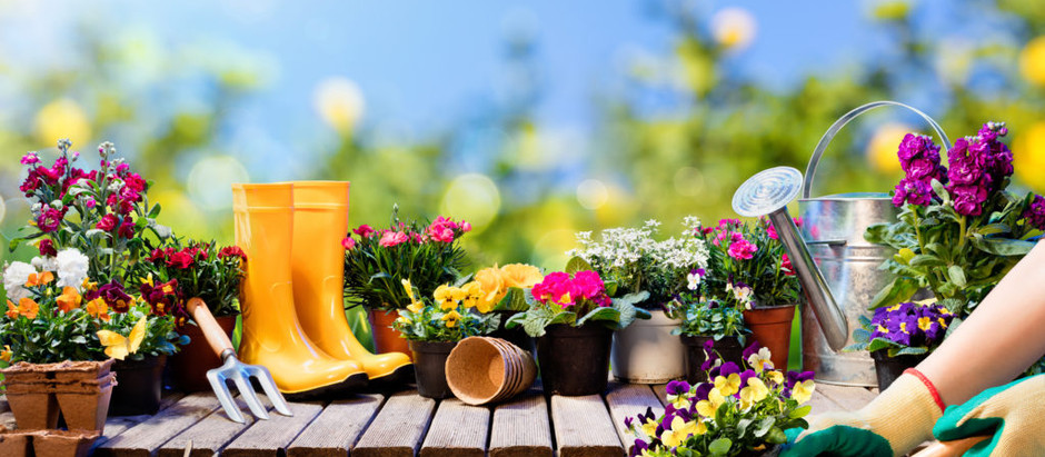How To Properly Plant Trees, Shrubs And Other Plants!