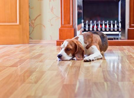 How Should I Clean My Hardwood, Laminate, Cork Or Plank Floor?