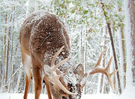 Deer Proofing