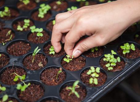 Indoor Growing of House Plants