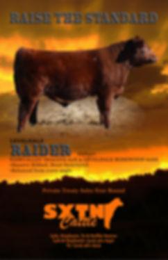 Sexton Cattle Spring 18 Shorthorn Bull A