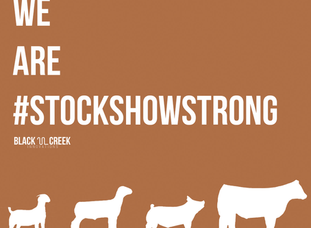 #StockShowStrong is headed to SALE 2021
