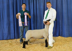 Zach Moore - Res Grand Champion Lamb.JPG