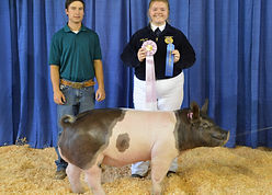 Megan Kett - FFA Res Champion Hog.JPG