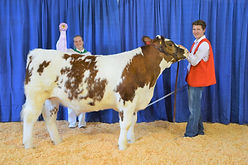 Tony Caruso - FFA Res Champion Steer.JPG