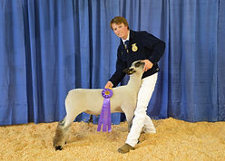 Sam Esperson - FFA Champion Lamb.JPG