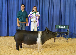 Marissa Davi - Res Grand Champion Hog.JP
