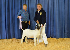 Stephanie Fuller - FFA Res Champion Goat