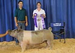 Grace Bors - Grand Champion Hog.JPG