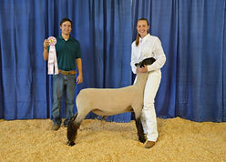 Emily Wilson - FFA Res. Champion Lamb.JP