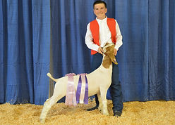 Anthony Pitto - Res Grand Champion Goat.