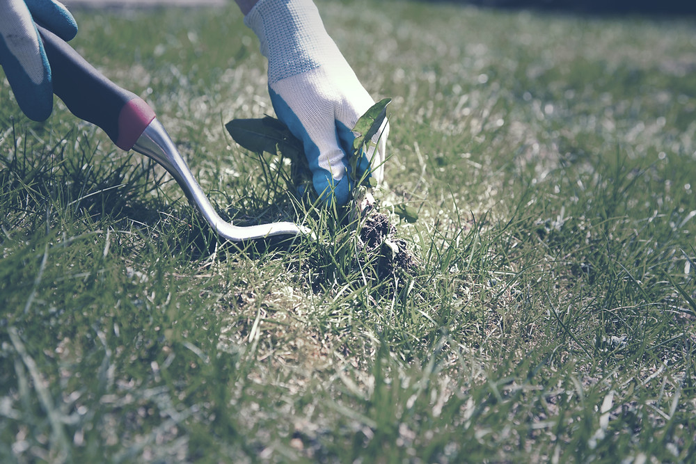 pull weeds at housing cooperative