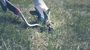Home Improvement Tip: Weeds
