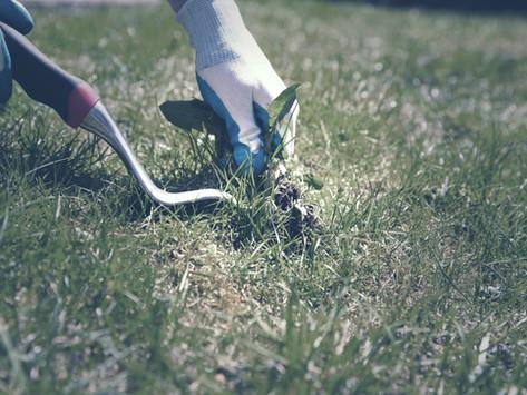 放置した雑草は9月に刈り取れ!