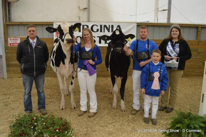2018 Virginia Holstein Spring Show