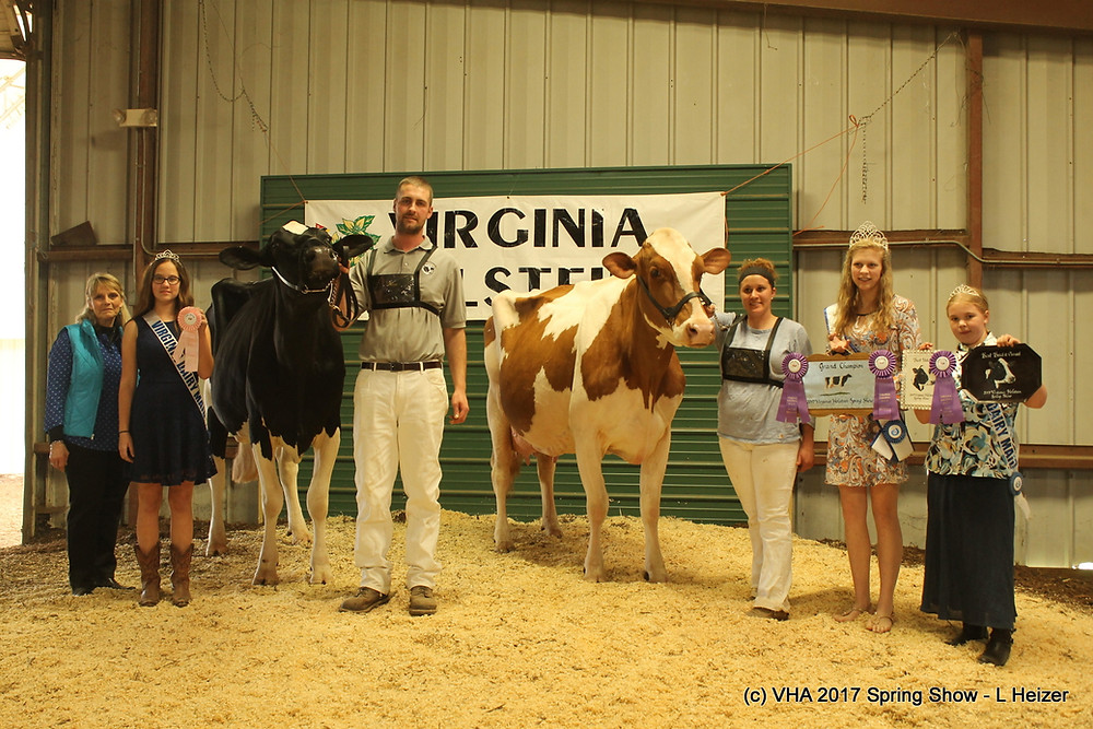 Grand and Reserve Grand Champion - Open Show