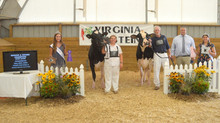 2020 Virginia Holstein Show Report