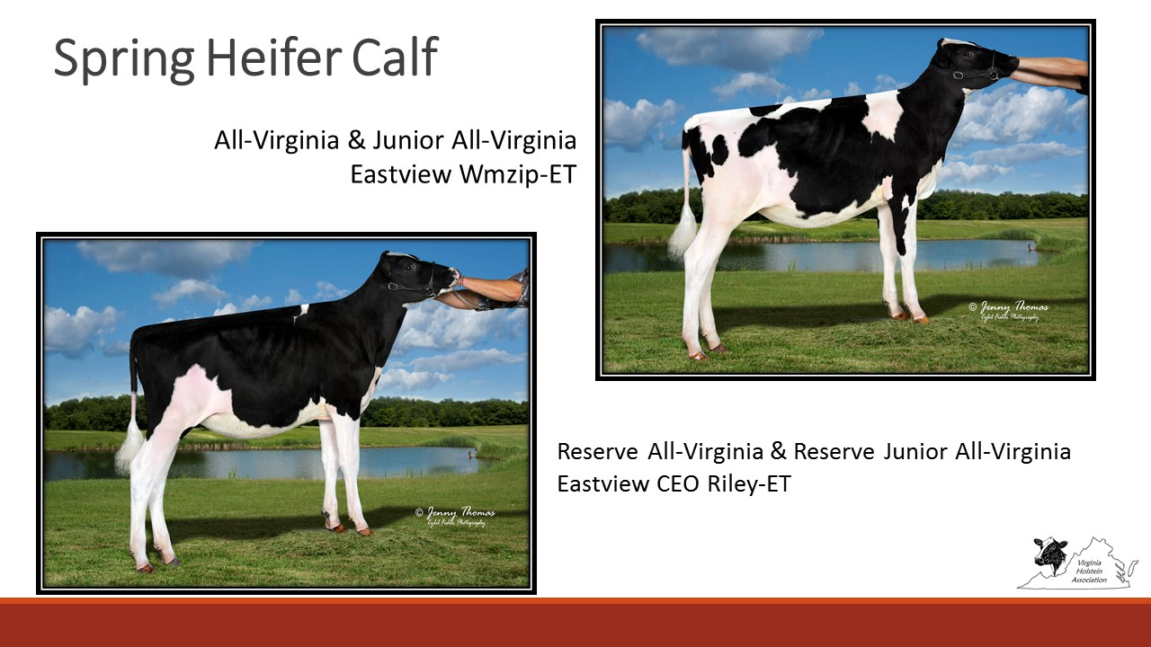 All-VA Spring Calf