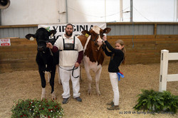 30- Junior Two Year Old- O-STOX Y-S Craun