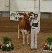 104-100k lb Cow - H Daubert.JPG