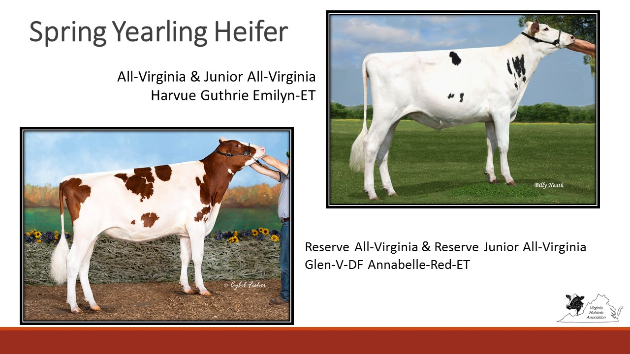 All-Virginia Spring Yearling