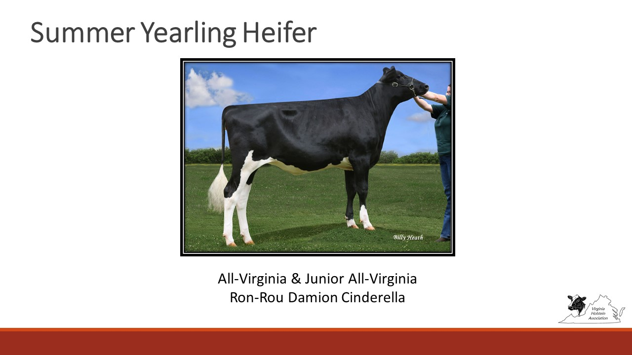 All-Virginia Summer Yearling