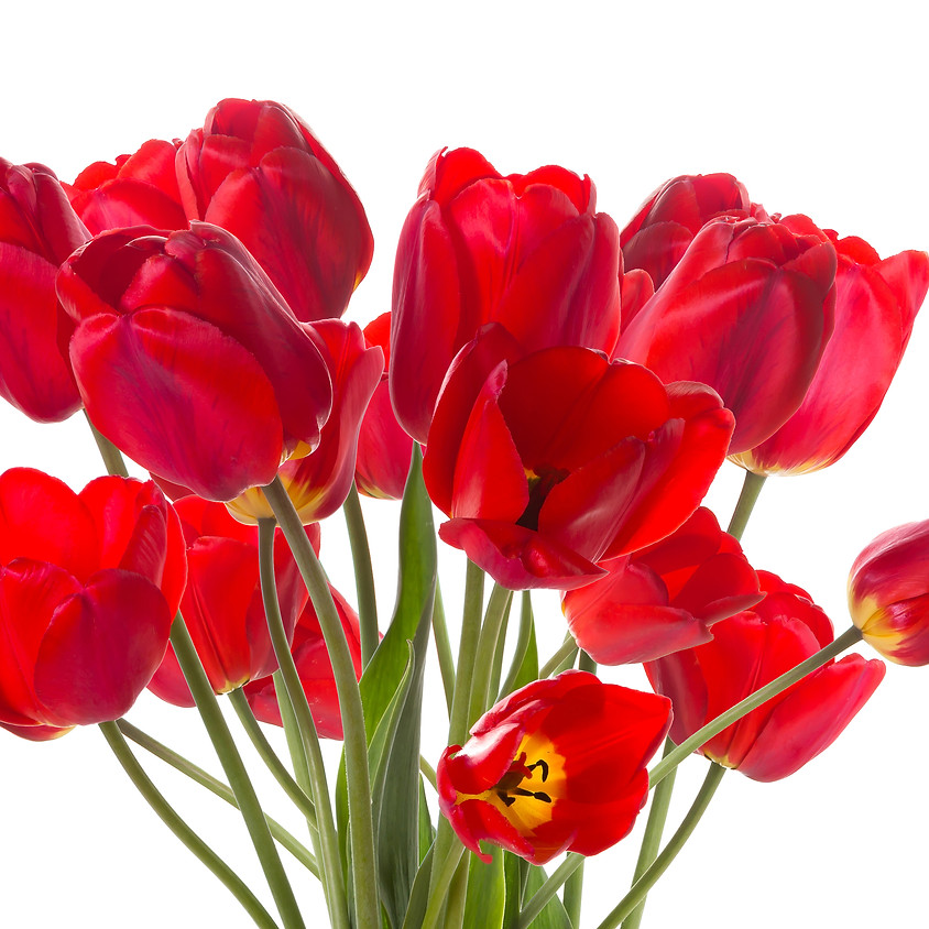 Springtime Flower Bulbs